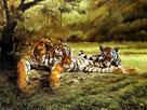 Spencer Hodge Tigers Eye SPR6032[1]