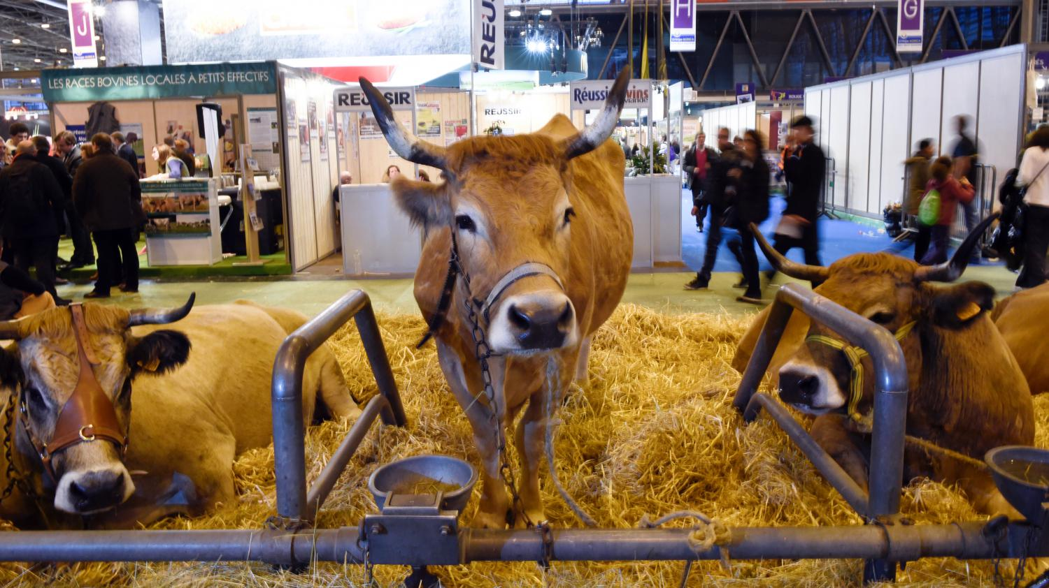 Le Salon De L Agriculture A Paris Video Quel Bilan Pour Le Salon De L Agriculture