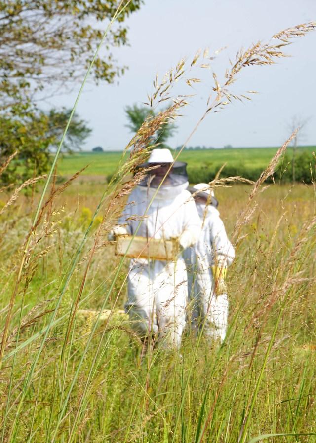 Bee Suits | Francois et Moi