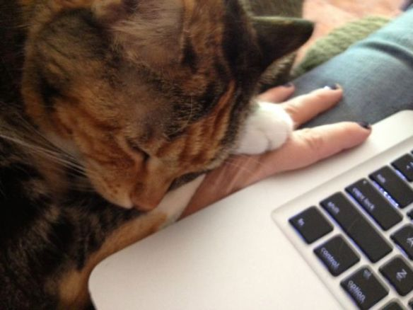 Writing Partners - Molly Jo and Lizzie Cat