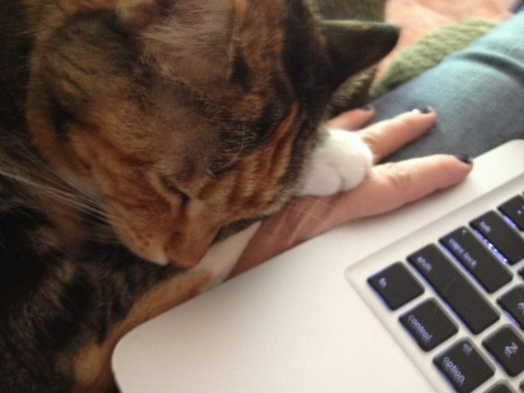 """Lizzie Cat ~ """"Mom, are you busy?"""""""