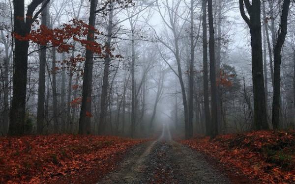 Fall Trees Wallpaper For Desktop Im 225 Genes De Paisajes Incre 237 Bles Para Usar Como Fondos De