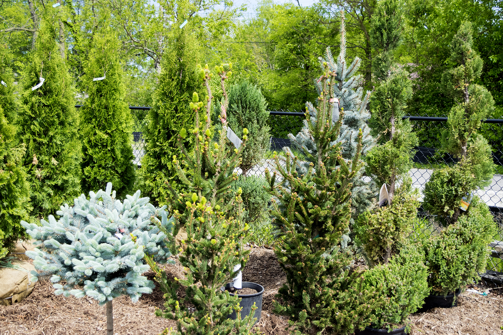 Trees And Shrubs Trees And Shrubs Add Value To Your Home And Enjoy The Beauty For