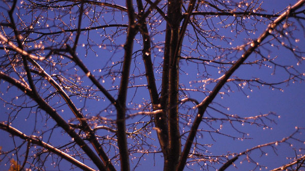 Tree Diamonds, 2004, photo by Fred Hatt