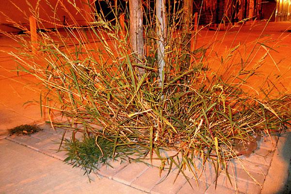 Grassburst, 2007, photo by Fred Hatt
