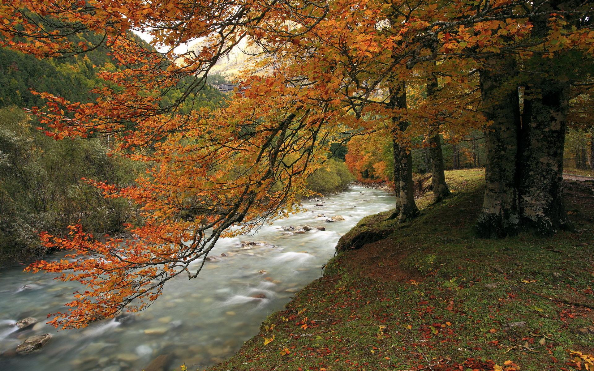 Galaxy S4 Fall Wallpaper Forest Autumn River Hd Wallpaper