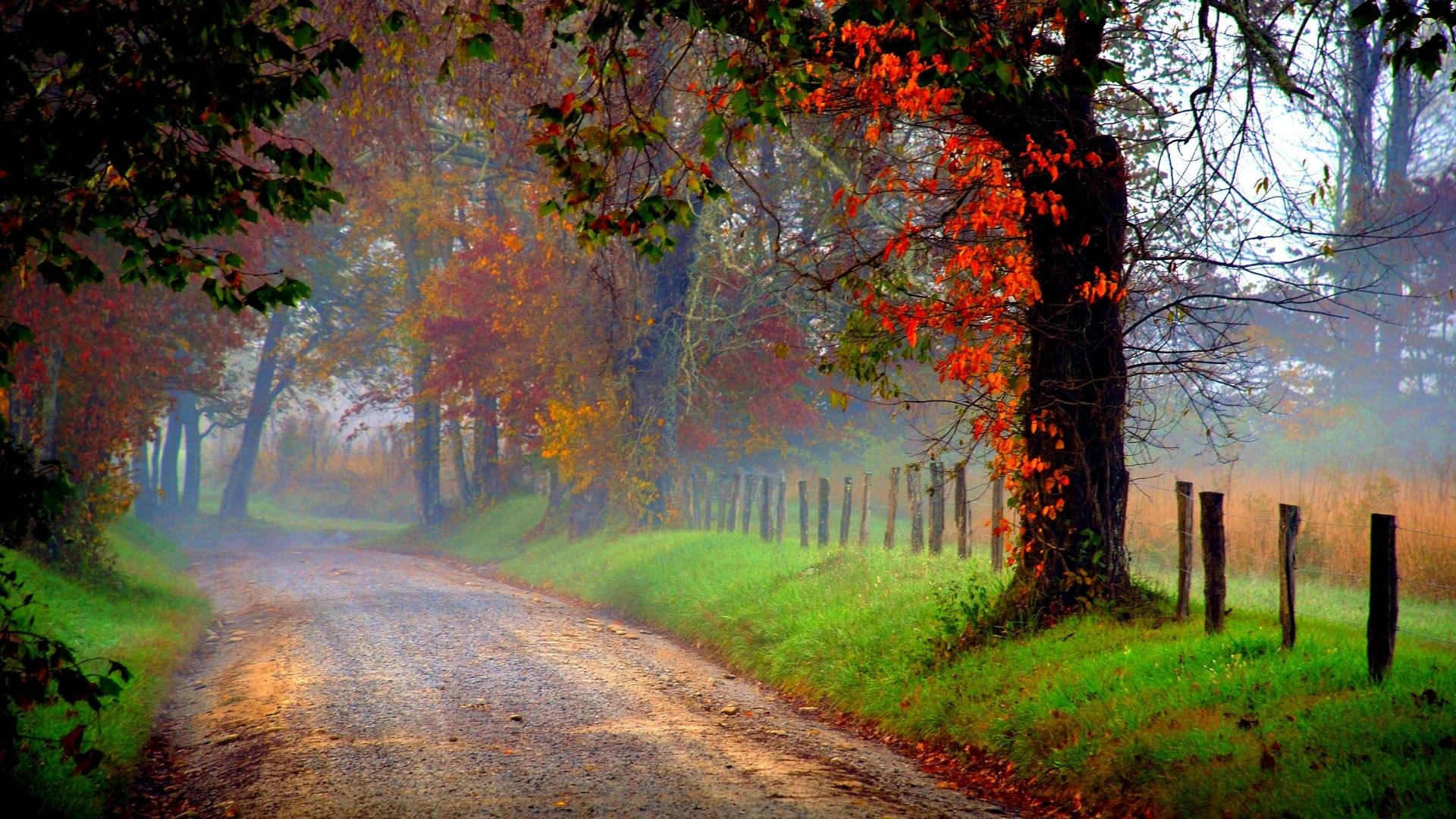 Fall Morning Wallpapers For Samsung 4 Country Road In Morning Fog Hd Hd Wallpaper