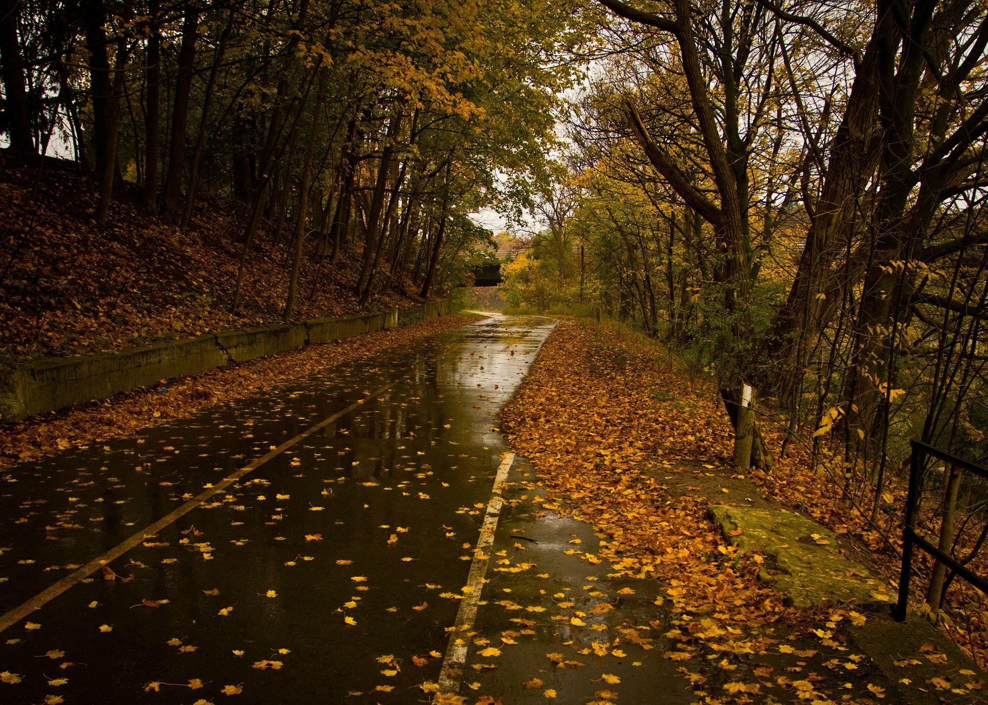 Iphone 6s Wallpaper Fall Wet Road Rainy Day Leaves Fall Autumn Hd Wallpaper