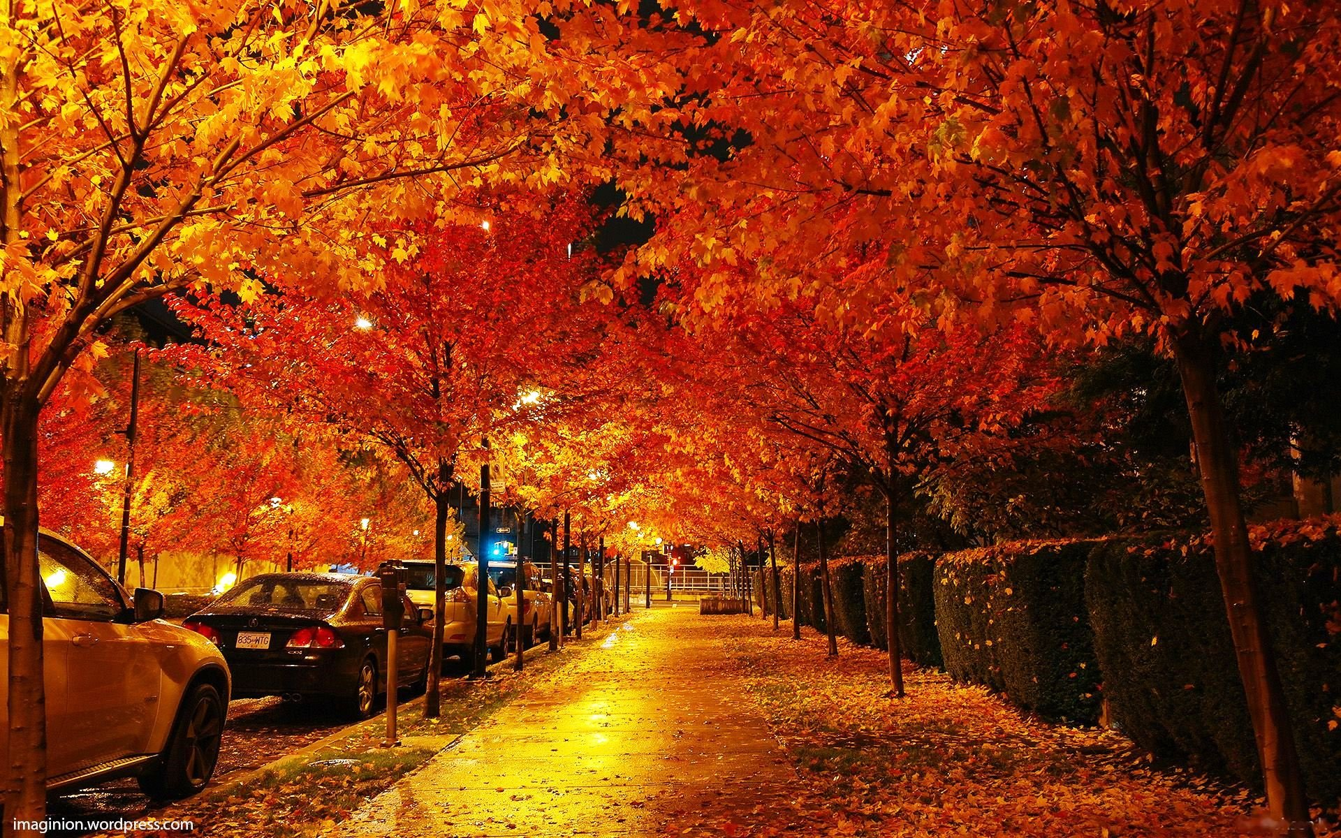 Iphone 5s Wallpaper Fall Vancouver Trees Street Canada Hd Wallpaper