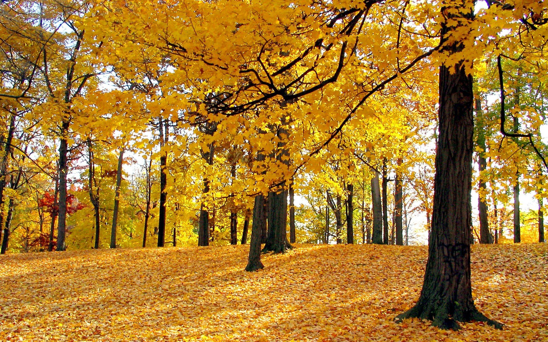 Fall Wallpaper Hd For Galaxy S4 Autumn In The Forest 16253 Hd Wallpaper