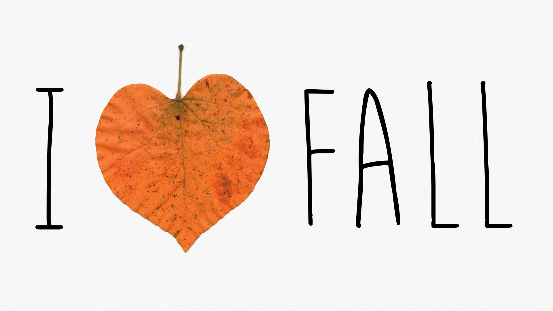 Fall Wallpaper Backgrounds Hd A Nifty Design For The Pumpkin Spice Lovers Out There Hd