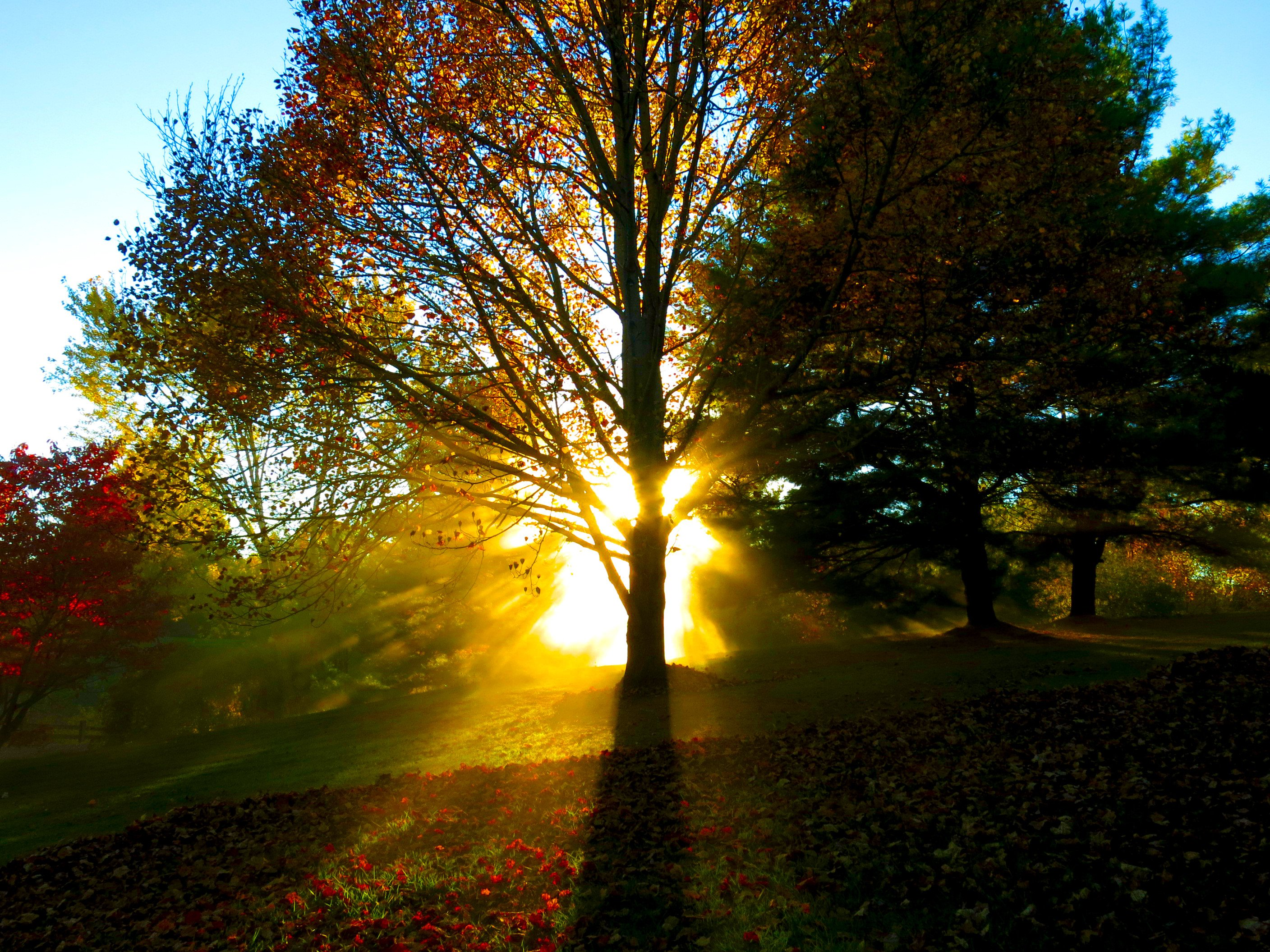 Fall Morning Wallpapers For Samsung 4 Sun Rays Through Trees As They Caught The Dust From My