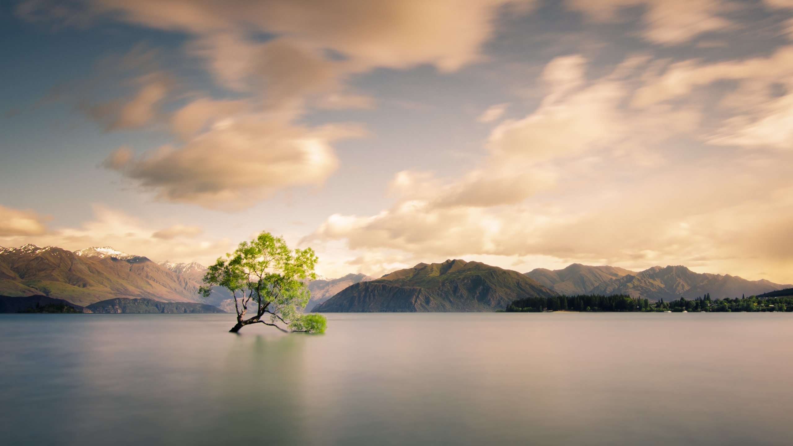 S4 Wallpaper Hd Lone Tree Of Lake Wanaka New Zealand Hd Wallpaper