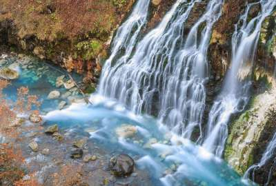 Afternoon Walk in Scottish Woodland HD wallpaper
