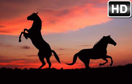 Cute Husky Wallpaper Horses Wallpaper Hd New Tab Horse Themes Free Addons