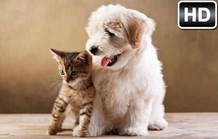 Cute Baby Hedgehog Wallpaper Cats Amp Dogs Wallpaper Hd Cat Vs Dog Themes Free Addons