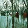 flood joke