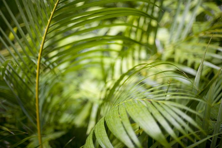 Green Nature Wallpaper Hd Image Of Greens Fronds Of A Cane Palm Freebie Photography