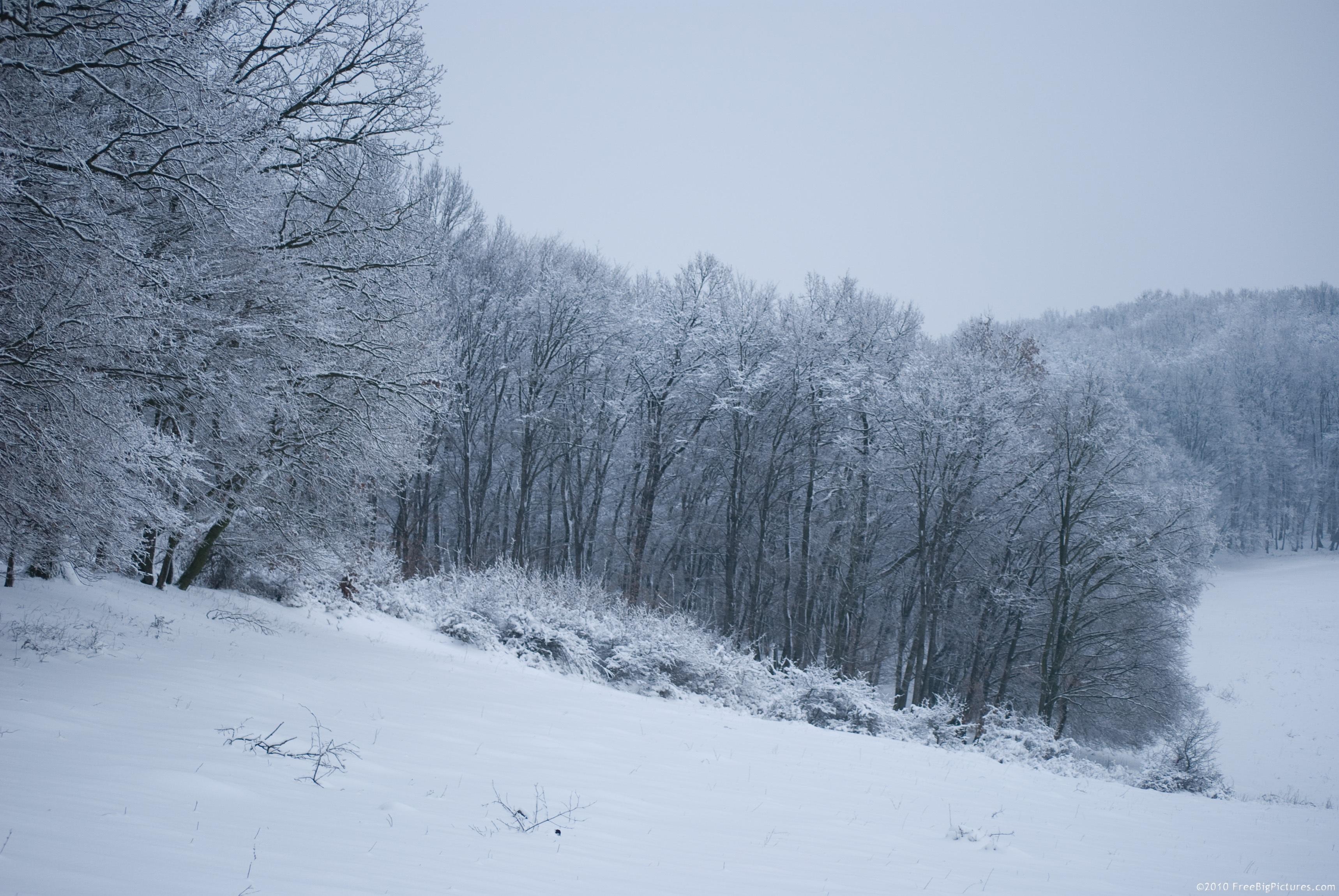 Free Snow Falling Animated Wallpaper Winter Landscape