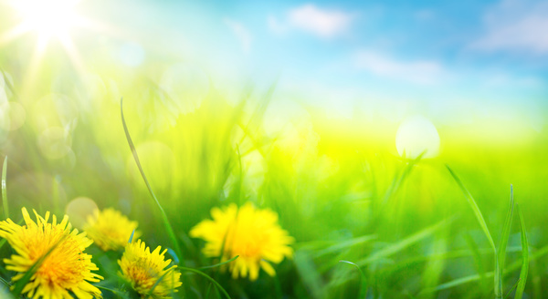 Spring Animal Wallpaper Spring Flower Background Yellow Butterfly Hd Picture 06