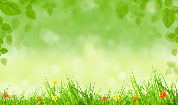 Flowers green leaves spring background HD picture free download