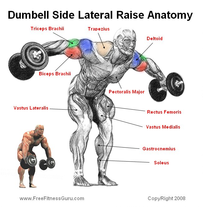Back - One-Arm Dumbell Rows Workout \ Fitness Pinterest Arms - proper running form