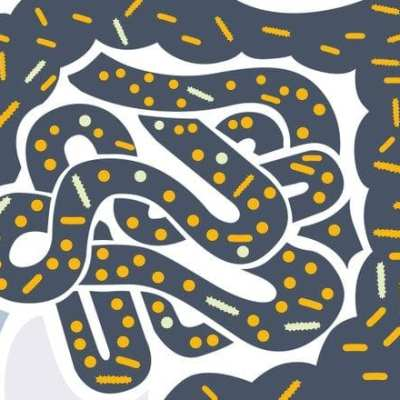 Gut Bacteria And Food Cravings