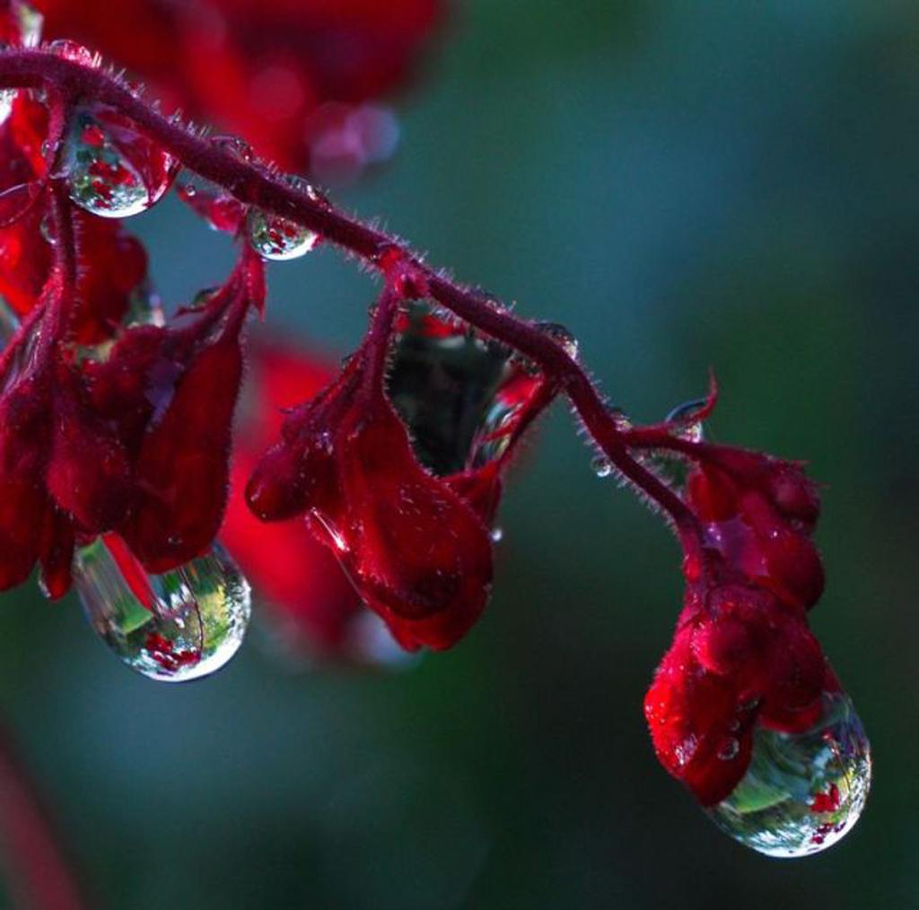 3d Water Drop Wallpapers Desktop Dew Drops Wallpapers Nature Wallpapers