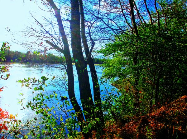 AUTUM PICTURES: Beautiful landscape - autumn river-forest-600x445