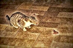 FreePhotosForCommercialUse.com-free-images-for-use-black-cat