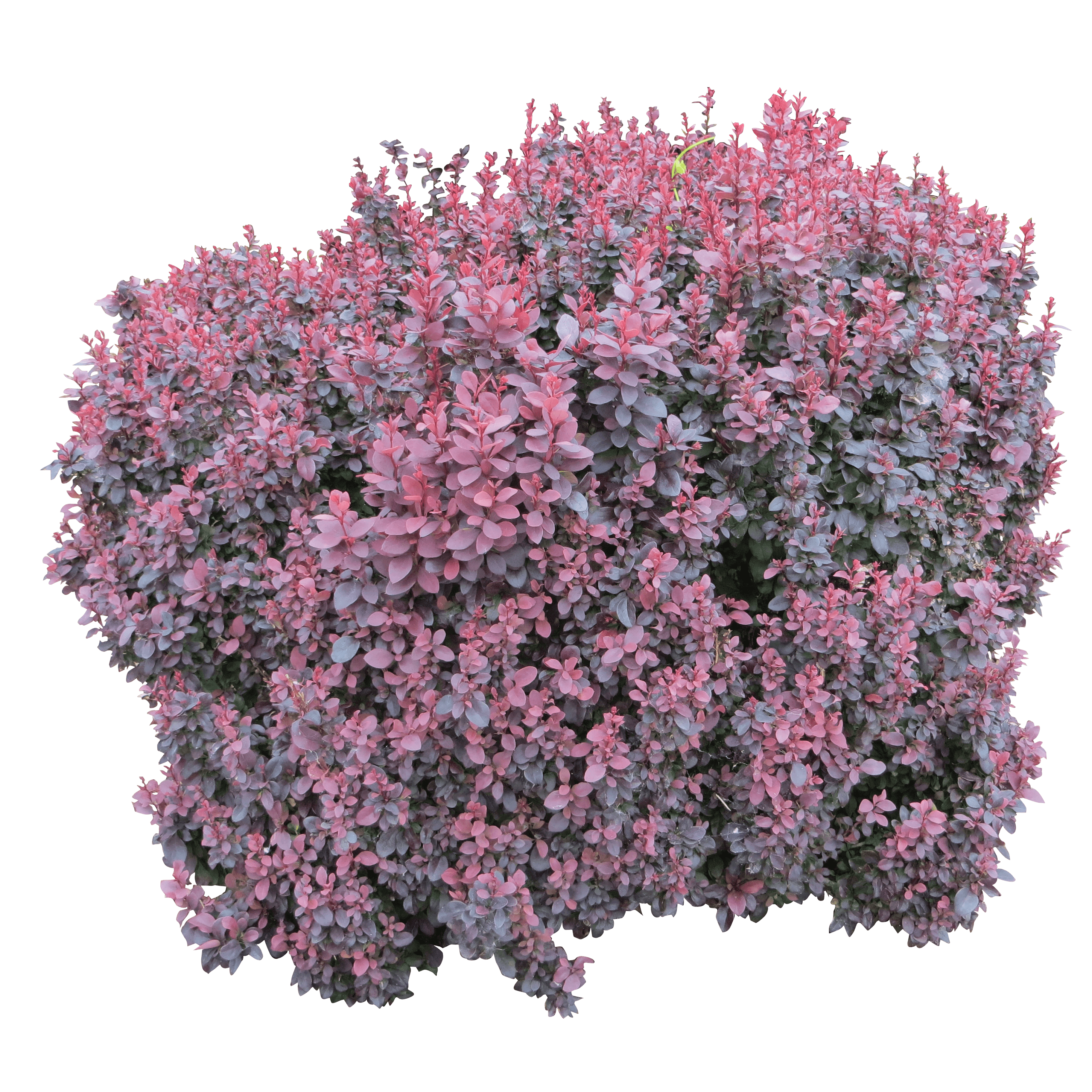 Flower Plant Top View Png Download Bush Png Image Hq Png Image Freepngimg