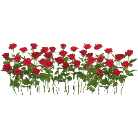 Tear Quotes Wallpaper Download Rose Free Png Photo Images And Clipart Freepngimg