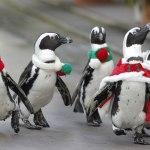 Фото дня: Пингвины на пробежке
