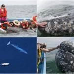 Самые дружелюбные киты на свете