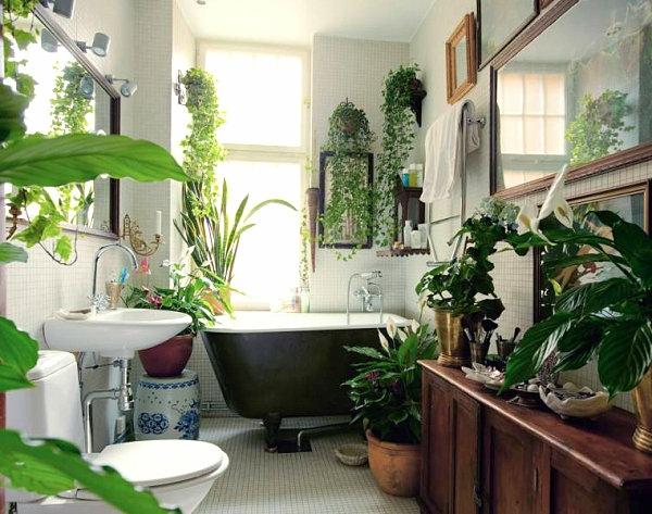 Ideale Pflanzen Fürs Bad