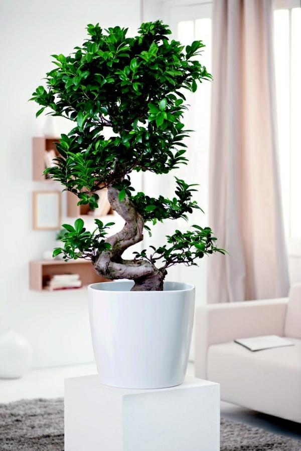 Große Pflanzen Fürs Wohnzimmer