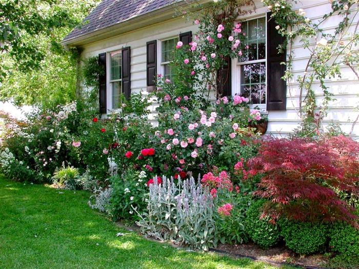 Vorgarten mit Pflanzen gestalten - 40 Ideen, wie Sie ein frisches - kleinen vorgarten gestalten