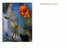 FC 913 orange vine  thinking of you