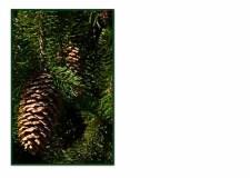 FC 046 pine tree