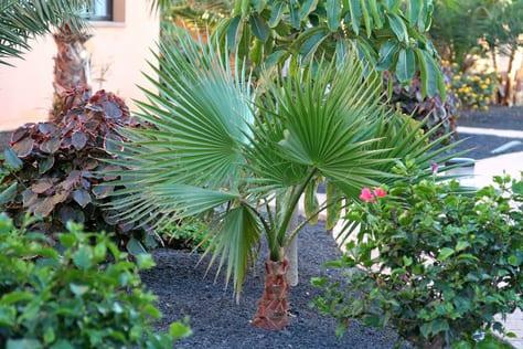 ... Exotische Pflanzen Im Eigenen Garten   FresHouse   Exotische Pflanzen  Zuchten Wohndesign 2017 Unglaublich Attraktive Dekoration ...