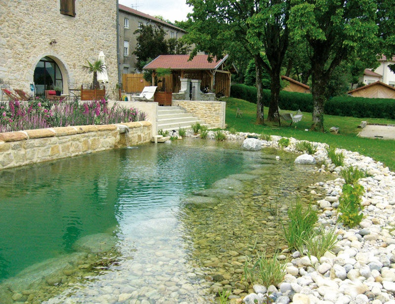 Choose A Natural Swimming Pool Or Pond All Plants And No
