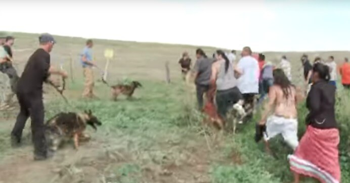 dapl_protest_dogs