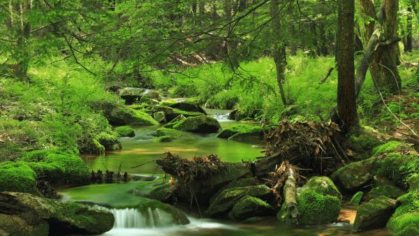 Bark_Cabin_Natural_Area__2____Flickr_-_Photo_Sharing_
