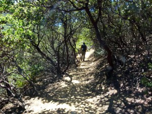 #5 Brooks Trail Manzanita by SL Walker