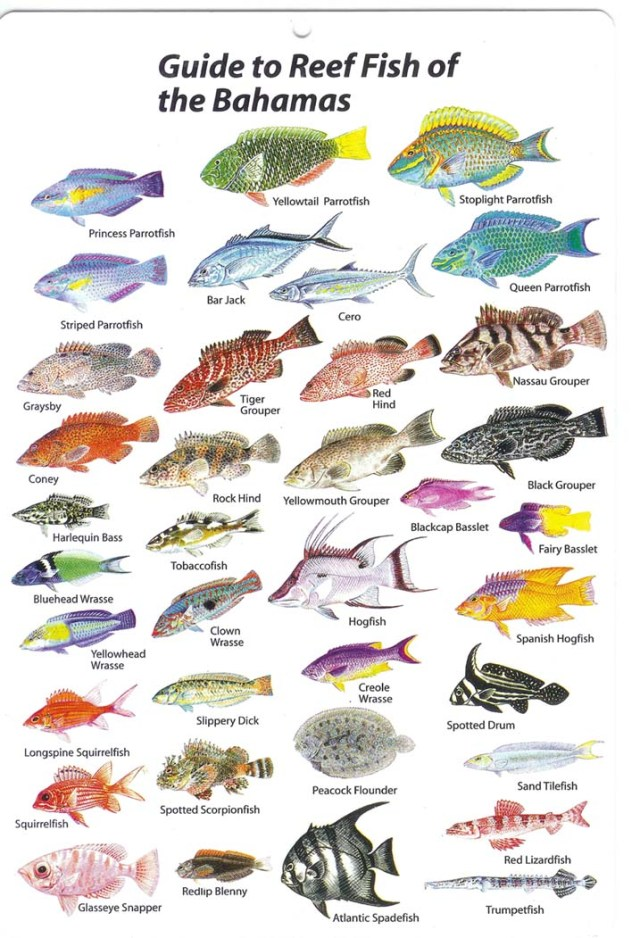 Saltwater fish list list of fish in florida 2017 fish for Saltwater reef fish