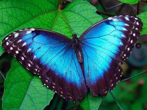 Iguazu Falls Brazil Wallpaper Who Else Lives In Costa Rica Butterflies From Canada