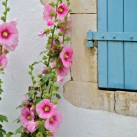 5 holiday lets in Ile de Ré still available this summer  - holiday challenge #2