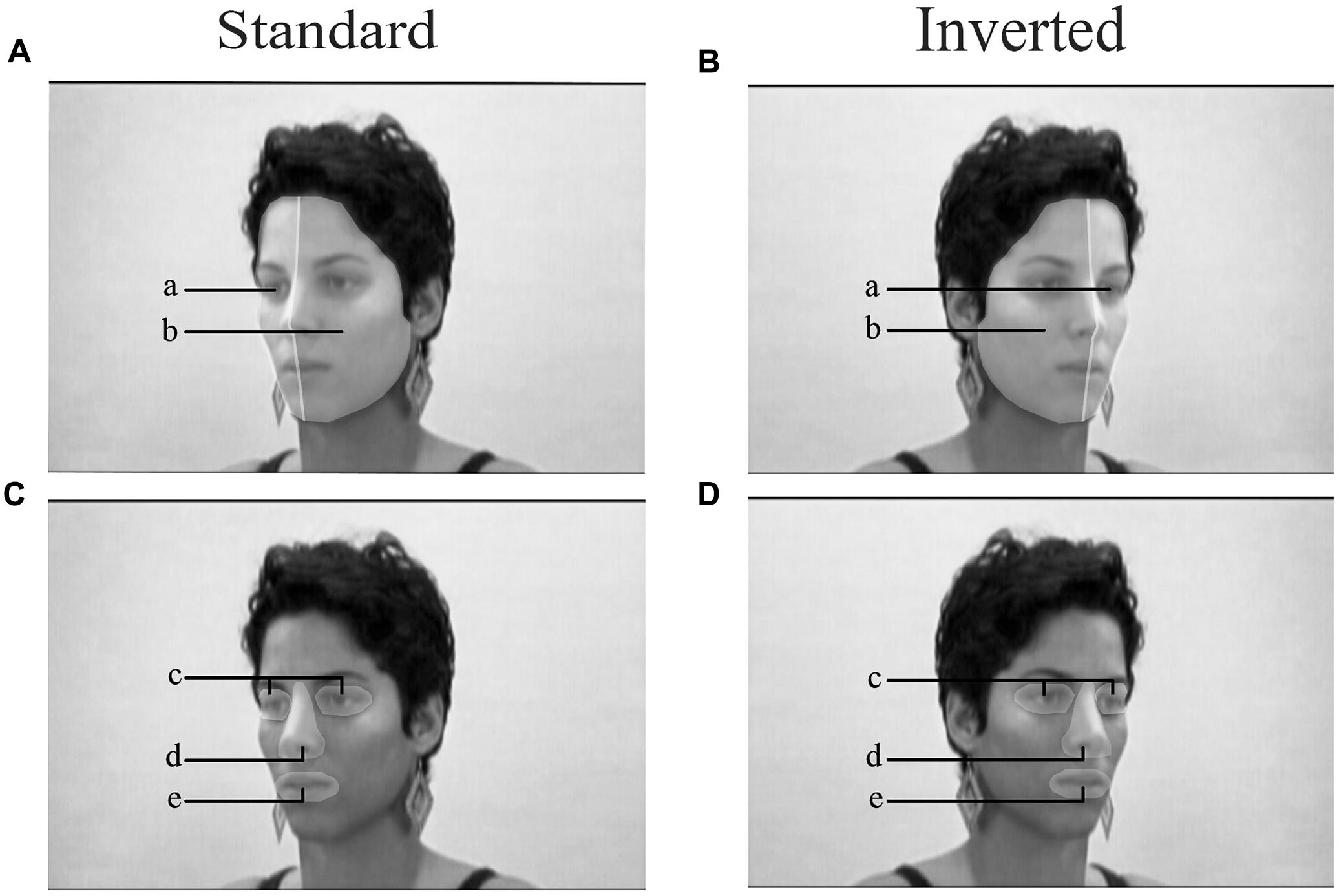 Duchenne Marker Smile Frontiers Hemiface Differences In Visual Exploration Patterns