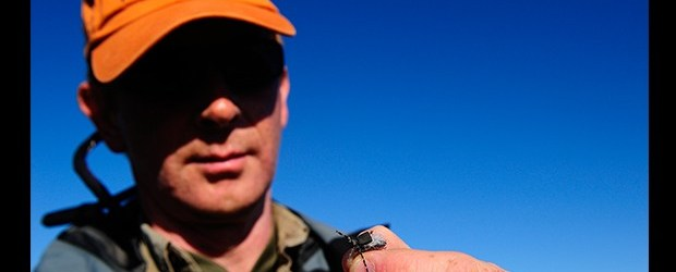 Brown Trout Fishing on Iceland's Big Laxa