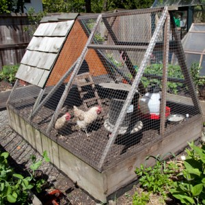 Mark Johnston's chicken tractor